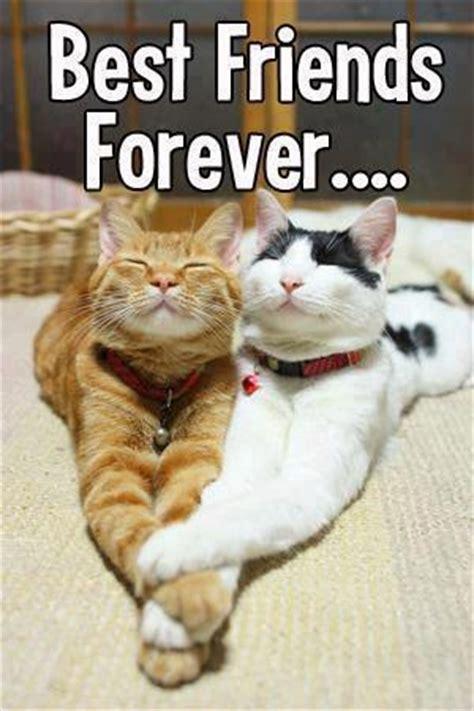Best friends forever   Cute cats   Pinterest