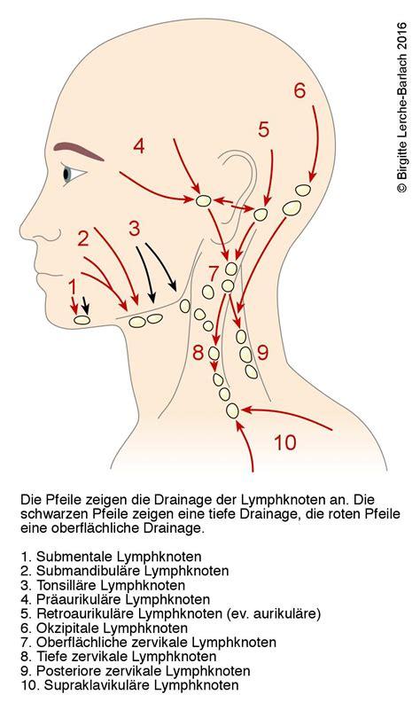 wo liegen die lymphknoten lymphsystem deximed