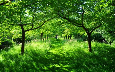 Green Garden by Green Garden Widescreen Hd Desktop Wallpapers 4k Hd