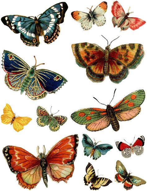 printable images of butterflies l 193 minas vintage antiguas retro y por el estilo