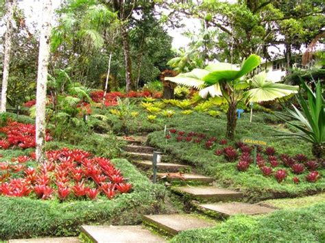 Wilson Botanical Gardens Wilson Botanical Garden San Vito Costa Rica Address Phone Number Top Attraction
