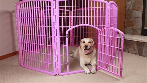 playpens for dogs safe playtime why you should consider a playpen for dogs top tips