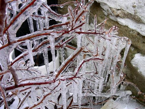 Tree Icicles - icicle