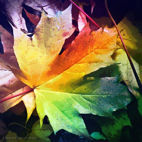 Autumn Leaf autumn leaf the vibes