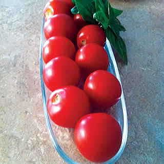 mt rugged magical seed mountain magic hybrid tomato seeds from park seed