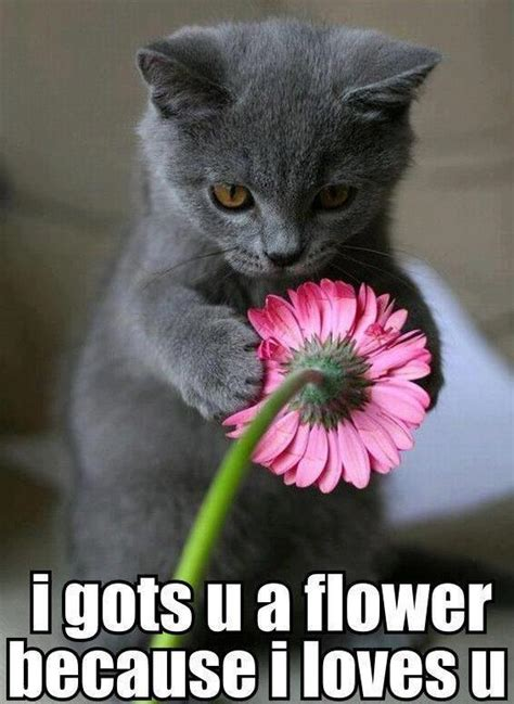 Flower Meme - crazy cat i gots u a flower because i loves u funny