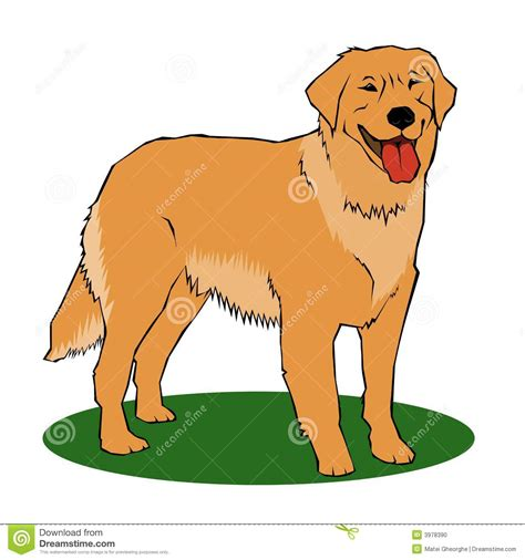 what color will my golden retriever be golden retriever stock photo image 3978390