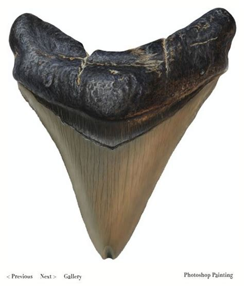 megalodon overestimated 21 best images about giant shark on pinterest mouths