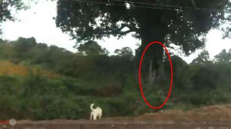 best ghost top 10 scary ghost top ghost sightings on