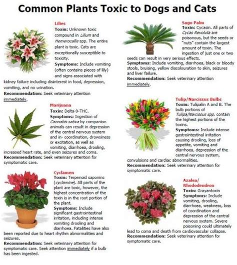 common house plants toxic to dogs pet safety for summer inside and out huffpost