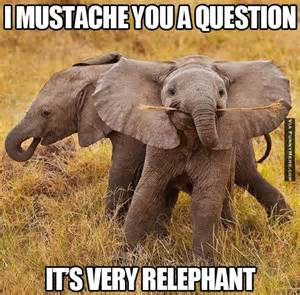 Baby Elephant Meme - elephant funny mustache animal memes it s very relephant