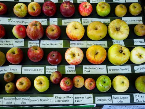 apple varieties 1000 images about apple varieties cultivars on pinterest