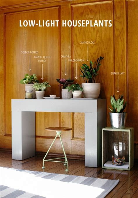 indoor plants for dark rooms 6 low light houseplants computers desks and wells