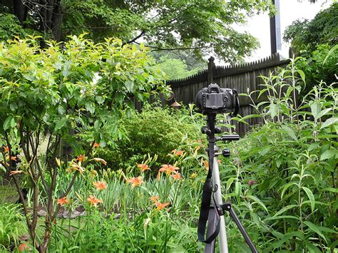 Backyard Bird Watcher by Safari Backyard Adventures Rainydaymagazine