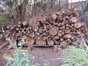 Whether Wood Is Considered Hardwood Or Softwood Is Determined By - choosing firewood wisely greensboro nc safe