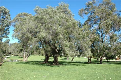 Botanic Gardens And Parks Authority Botanic Gardens And Parks Authority Peppermint Lawn