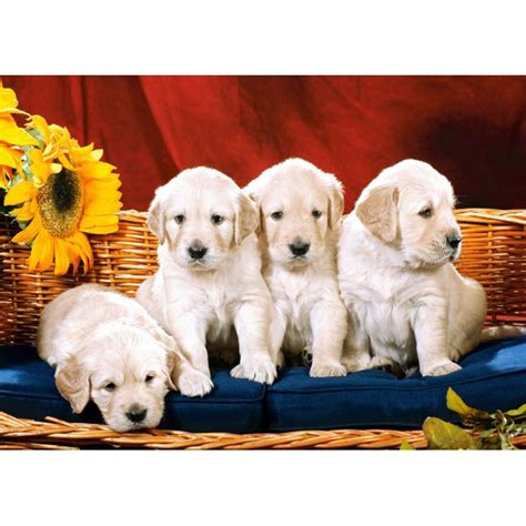 puzzle puppies jigsaw puzzle dogs jigsaw and more