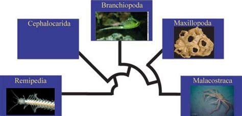 lade a filo amigos para siempre filos reino animal artropodos