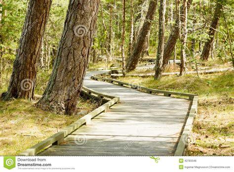chemin en bois en nature photo stock image 42783346