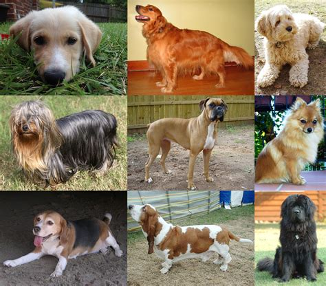 imagenes de animales wikipedia dog wikipedia