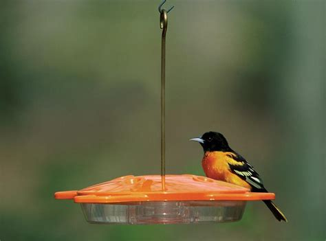 aspects oriole feeder as361 aspects bird feeders