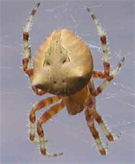 Garden Spider Colorado Spider Thread Page 2