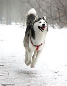 jumping for joy dog pictures