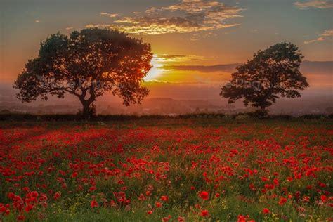 sunset backgrounds aesthetic photo