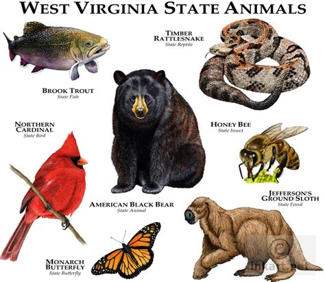 igbo names for animals west africa animal state animals of west virginia line and color