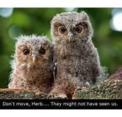 Funny Jokes N Pictures  Owl Meme
