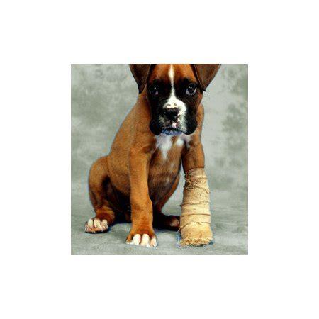 ellenbrook animal clinic vets veterinary surgeons