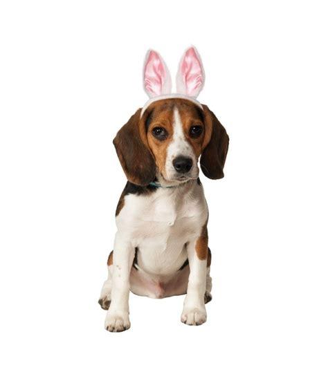 bunny ears for dogs bunny ears