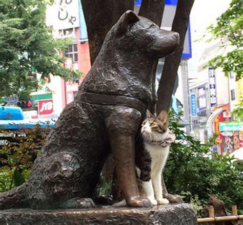 Feline Inspired Speakers From Japan by Shibuya S Hachiko Has A New Feline Pal And They Look