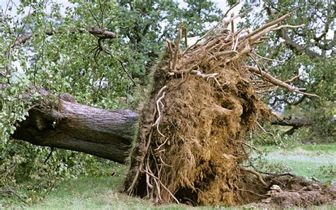 home insurance and fallen trees fallen tree query doubles home insurance premium i love claims