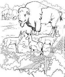 zoo coloring pages zoo coloring pages coloringpages1001