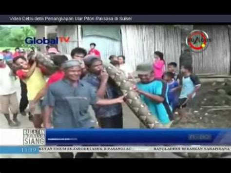 film ular raksasa youtube ular piton raksasa ditangkap warga sulsel youtube