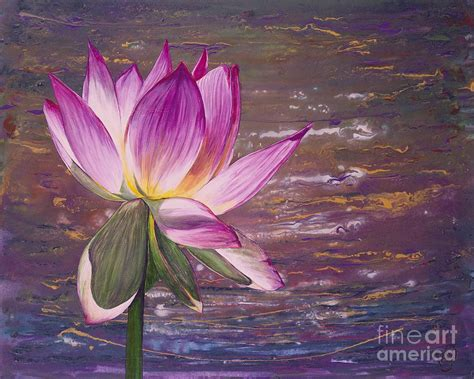 lotus flower paintings www imgkid the image kid
