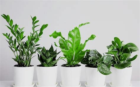 best houseplants 15 best low light houseplants to grow indoor