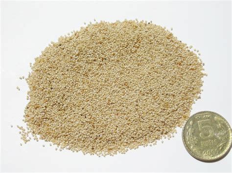 Poppy Seeds Khuskhus For And Health And Personality Grooming by Simple Ayurvedic Health Tips Poppy Seeds Khus Khus Aid