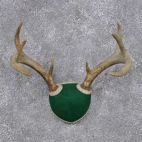 Deer Rack For Sale by Deer Antlers Search Results Calendar 2015