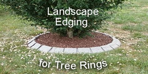 Landscape Edging Around Tree Roots Lawn Edging For Tree Rings Landscape Edging