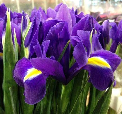 fiori a marzo 5 fiori ideali per un matrimonio a marzo lombarda flor