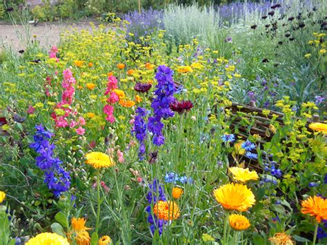 Higgledy Garden Annual Garden Flowers