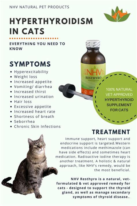 thyroid issues in dogs de 35 b 228 sta thyroid issues in pets bilderna p 229