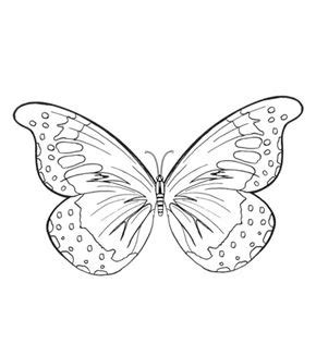 coloring pages of butterfly wings colouring pages butterfly wings and wings on pinterest
