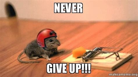 Never Give Up Meme - never give up meme