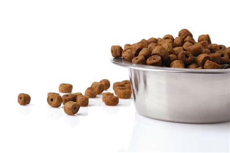 best affordable puppy food affordable hypoallergenic food pet supplies uk