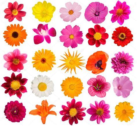 decorative flower flowers decorative collection stock photo 169 olegusk 1249373