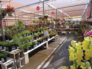 merediths garden blog  garden centre picks stores