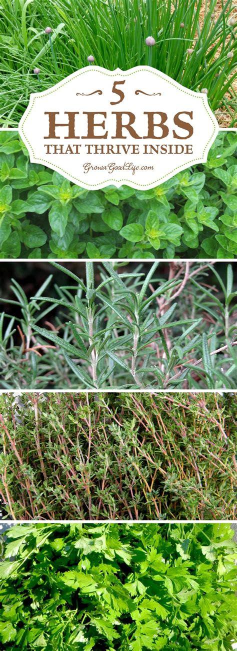 growing herbs inside 25 best ideas about growing herbs indoors on pinterest